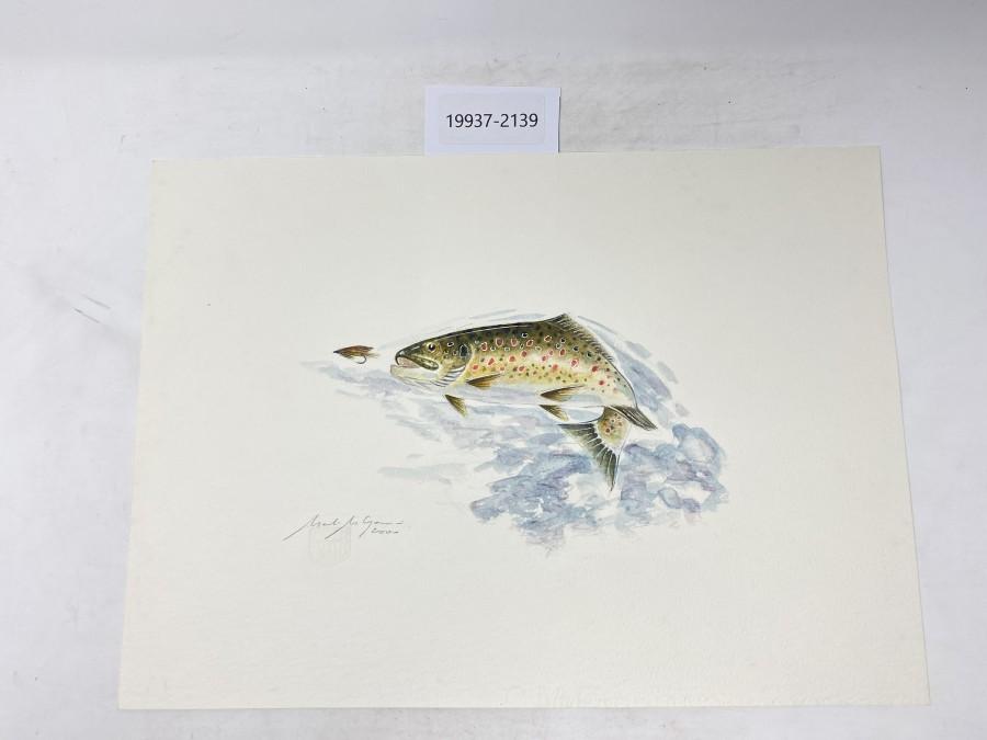 Aquarell von Maden Merkas Goranin, Bachforelle, 2000, 370x265mm