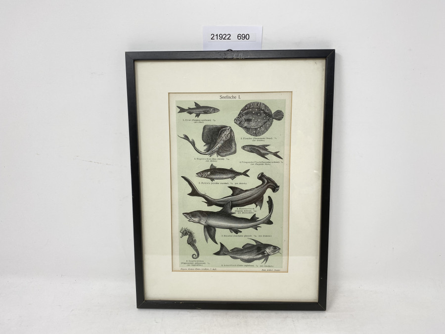 Bild im Holzrahmen, Seefische I, 310 x 230mm